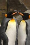 król pingwin Fotografia Royalty Free