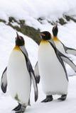 król pingwin Obrazy Stock