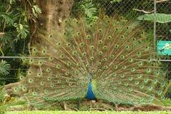 król ptaka Zdjęcia Royalty Free