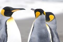 Królewiątka pingwiny przy plażą Południowy Geogia Zdjęcia Stock