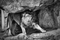 Królewiątko dżungla Obraz Stock