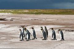 królewiątko pingwinów grupa Fotografia Royalty Free