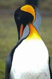 Królewiątko pingwin w Południowym Gruzja Fotografia Stock