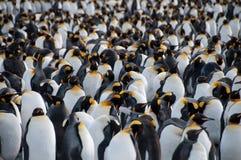 Królewiątko pingwiny na Złocistym schronieniu Zdjęcia Royalty Free