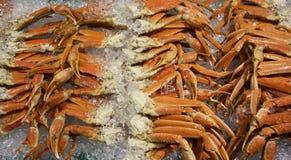 Królewiątko kraba bodies na lodzie i pazury Obraz Royalty Free