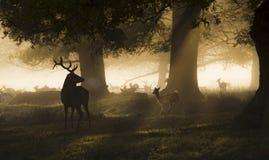 Królewiątko las Zdjęcia Stock