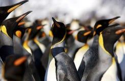 królewiątko pingwin Zdjęcia Royalty Free