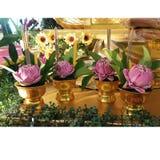 Królewscy lotuses Zdjęcie Royalty Free