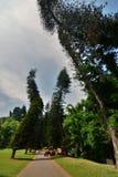 królewscy ogrody botaniczne Peradeniya kandy Sri Lanka Obraz Stock