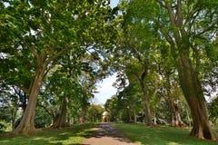 królewscy ogrody botaniczne Peradeniya kandy Sri Lanka Zdjęcia Stock