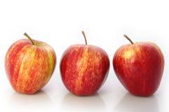 królewska jabłko galówka Obraz Royalty Free