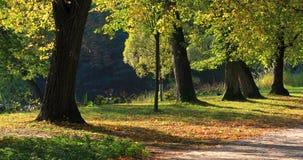 Królewski Lazienki park w Warszawa, Polska zbiory wideo