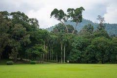 Królewski ogród botaniczny Obrazy Royalty Free