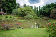 Królewski ogród botaniczny Jeziorny Sri Lanka Zdjęcie Royalty Free