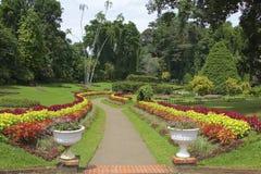 Królewski ogród botaniczny Peradeniya, Sri Lanka Zdjęcia Stock