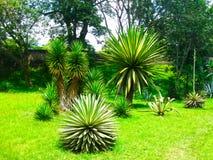 Królewski ogród botaniczny Peradeniya Sri Lanka Zdjęcia Royalty Free