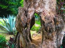 Królewski ogród botaniczny Peradeniya Sri Lanka Zdjęcie Stock