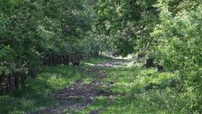Królica bieg w lesie zbiory wideo