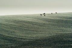 królicy pole Zdjęcie Stock