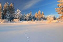 Królików odciski stopy w śniegu obraz royalty free