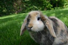 królik. obraz stock