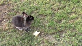 królik zbiory wideo