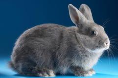 królik. fotografia stock