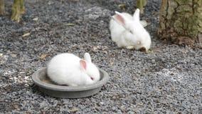 królik zdjęcie wideo