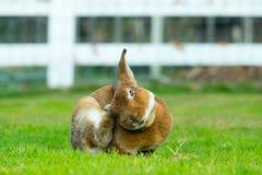 królik Zdjęcia Stock