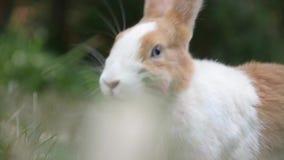 królik zbiory