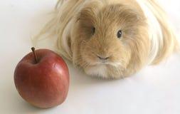 Królik doświadczalny z czerwonym jabłkiem na Oct 2, 2015 Zdjęcie Royalty Free