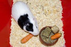 królik doświadczalny Zdjęcia Royalty Free