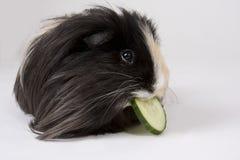 królik doświadczalny biel obraz stock