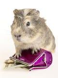 królik doświadczalny gotówkowy portfel zdjęcie royalty free