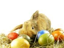 królik Easter Zdjęcia Royalty Free