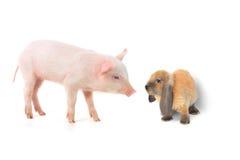 Królik i świnia Obraz Royalty Free