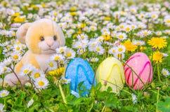 Królik i Easter jajka Obrazy Stock