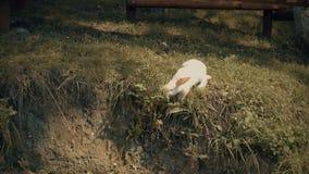 Królik je trawy lato zbiory