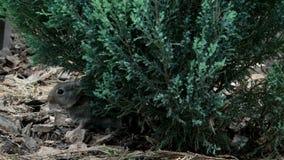 Królik jest Pięknym zwierzęciem natura zdjęcie wideo