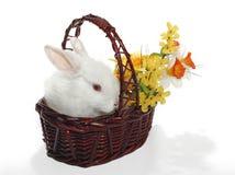 królik kwiatów Obraz Royalty Free