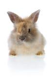królik śmieszne Fotografia Stock