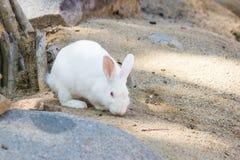 królik na kamieniu w Tajlandia Zdjęcie Royalty Free