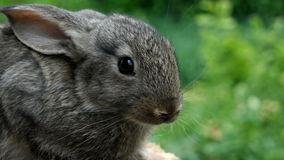królik Piękny zwierzę dzika natura zbiory wideo