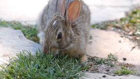 królik słodki zdjęcie wideo