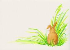 królik trawa Obrazy Royalty Free
