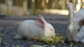 Królik w ogródzie, mały królik zdjęcie wideo