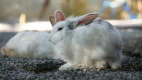 Królik w ogródzie, mały królik zbiory wideo