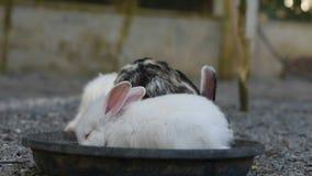 Królik w ogródzie, mały królik zbiory