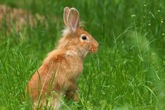 Królik w trawie, wiosna, Easter Fotografia Stock