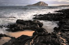 Królik wyspa obrazy stock